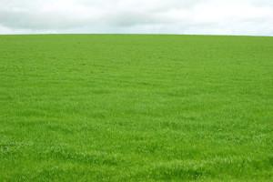 Open field of grass