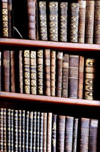 WordPress Author Categories Dropdown